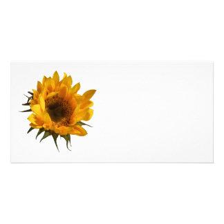 Sunflower Opening Customized Photo Card