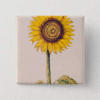Sunflower or Helianthus Button