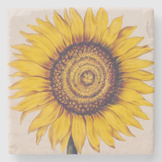 Sunflower or Helianthus Stone Coaster