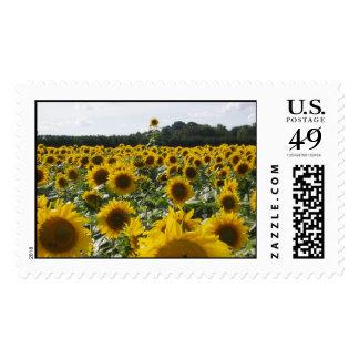 Sunflower Overachiever Stamp