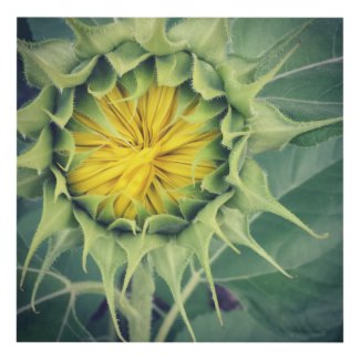 Sunflower Panel Wall Art