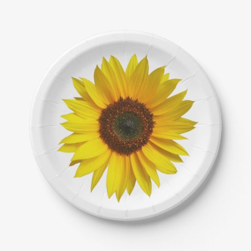 paper party plates