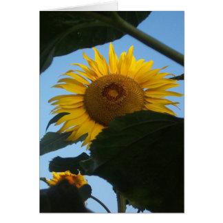 Sunflower Peeking Notecard