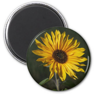 Sunflower Perfect Magnet