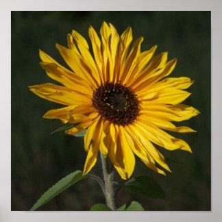 Sunflower Perfect Print