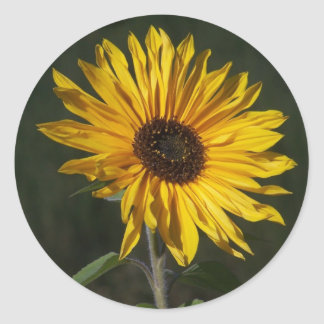 Sunflower Perfect Sticker