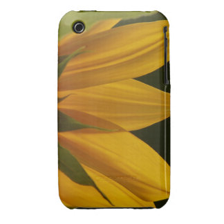 Sunflower Petals iPhone 3 Case
