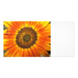 Sunflower Photo Cards