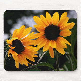 Sunflower Photo Mouse Pad