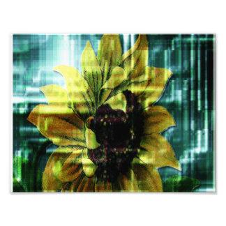 Sunflower Photo Print
