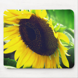 Sunflower Photo printed on a Mousepad