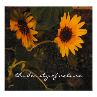 Sunflower Picture Poster