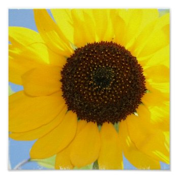 Sunflower Picture Print by PerennialGardens at Zazzle
