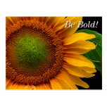 Sunflower Post Cards