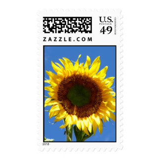 Sunflower Postage Stamps