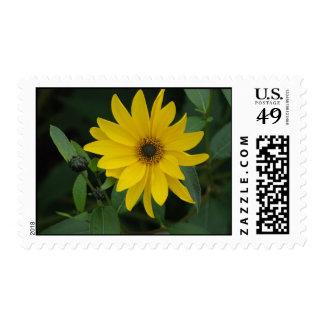 Sunflower Postage