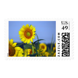 Sunflower Postage Stamp