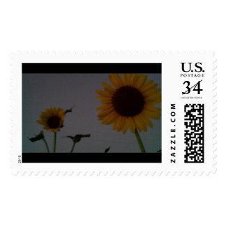 Sunflower Postage Garden 100_8184