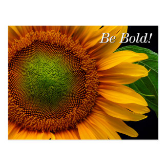 Sunflower Post Cards