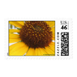 Sunflower Postcard Postage Stamp