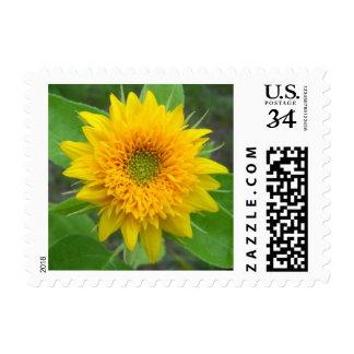 Sunflower postcard stamp horizontal