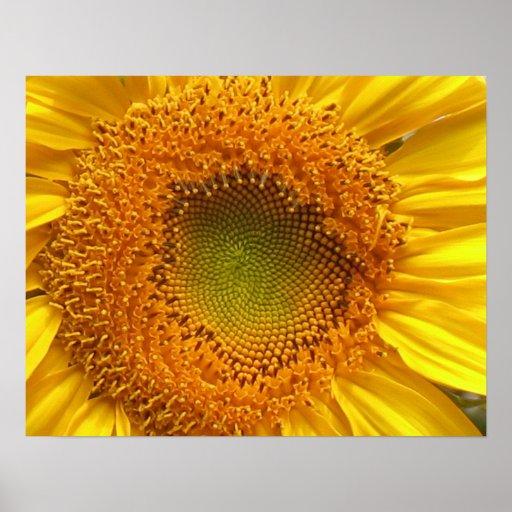 Sunflower Poster Prints