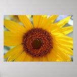 Sunflower Poster, S Cyr