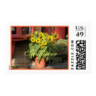Sunflower Pot Postage Stamp