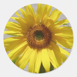 Sunflower Power! Classic Round Sticker