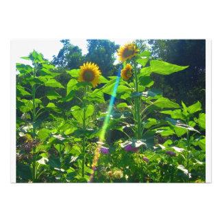 Sunflower Power Custom Invites