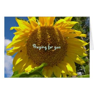 Sunflower Praying Cards