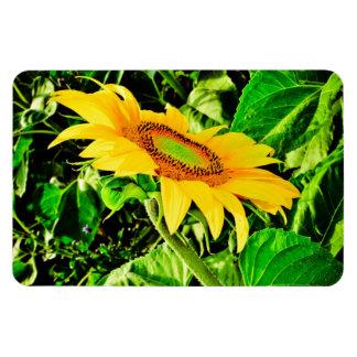 Sunflower Rectangular Photo Magnet