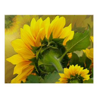 Sunflower ~ Print