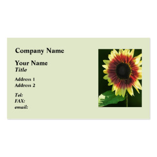 Sunflower Ring of Fire Closeup Business Card Templates