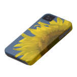 Sunflower Rising iPhone 4 Case-Mate ID iPhone 4 Cover