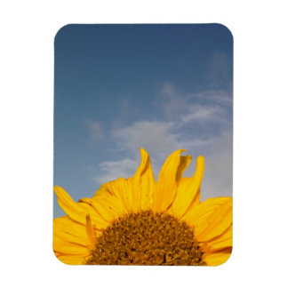 Sunflower rising like the sun magnet