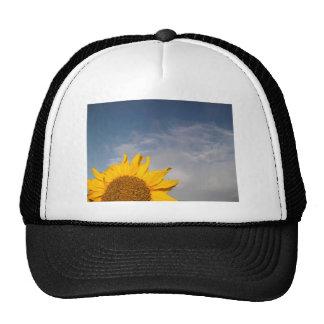 Sunflower rising like the sun trucker hat