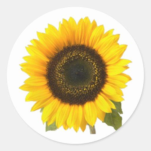 Sunflower Classic Round Sticker | Zazzle