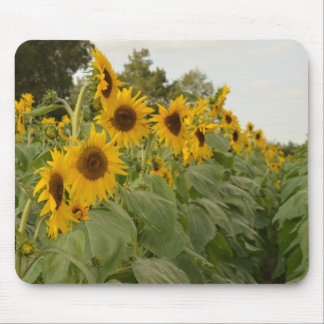 Sunflower Row Mouse Pad