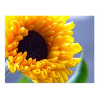 Sunflower Seasonal Inspirationals Postcards