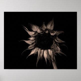 Sunflower - Sepia Fine Art Photograph Unique Cool Poster