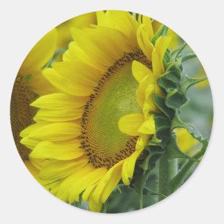Sunflower series classic round sticker