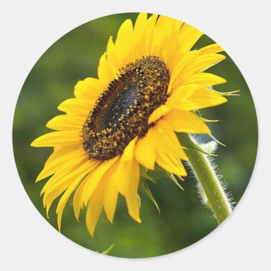 Sunflower Sideshot Classic Round Sticker