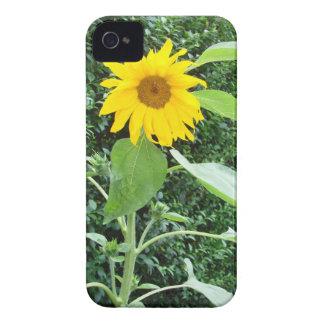 Sunflower Solo iPhone 4 Case-Mate Case
