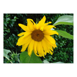 Sunflower Solo Large Business Card