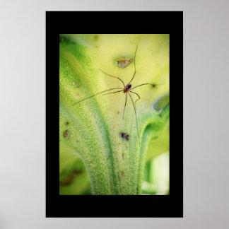Sunflower Spider Poster