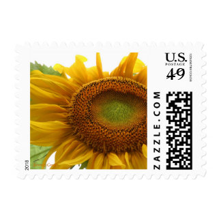 Sunflower stamps