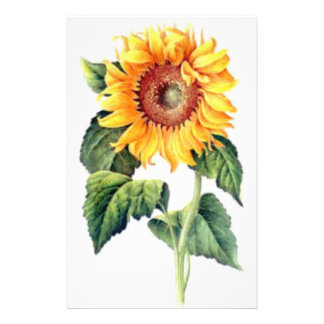Sunflower Personalized Stationery