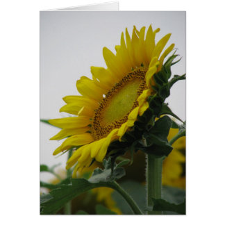 Sunflower Summer Series Card