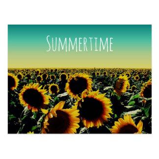 Sunflower Summertime Postcard